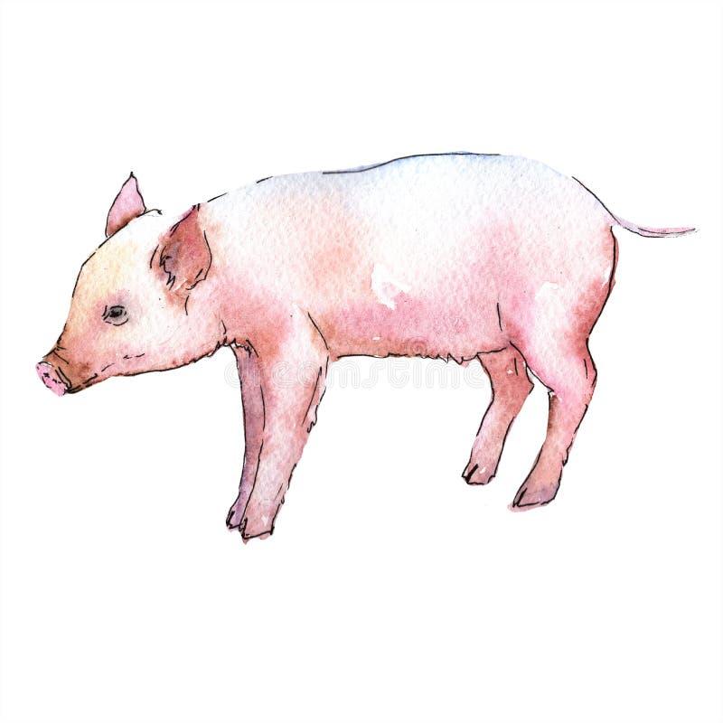 Wildes Tier des rosa Schweins in einer Aquarellart lokalisiert stock abbildung