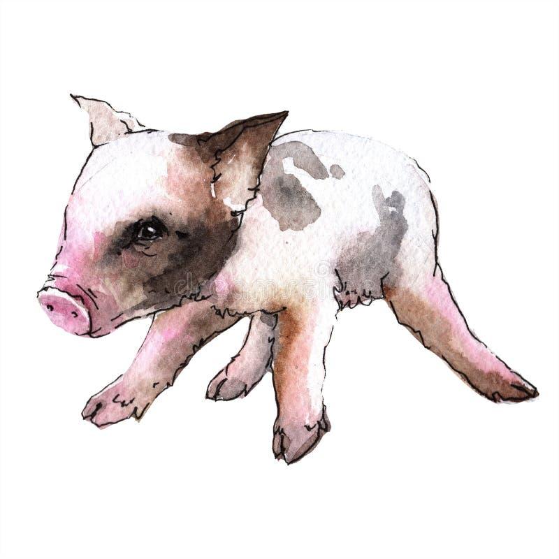Wildes Tier des rosa Schweins in einer Aquarellart lokalisiert lizenzfreie abbildung