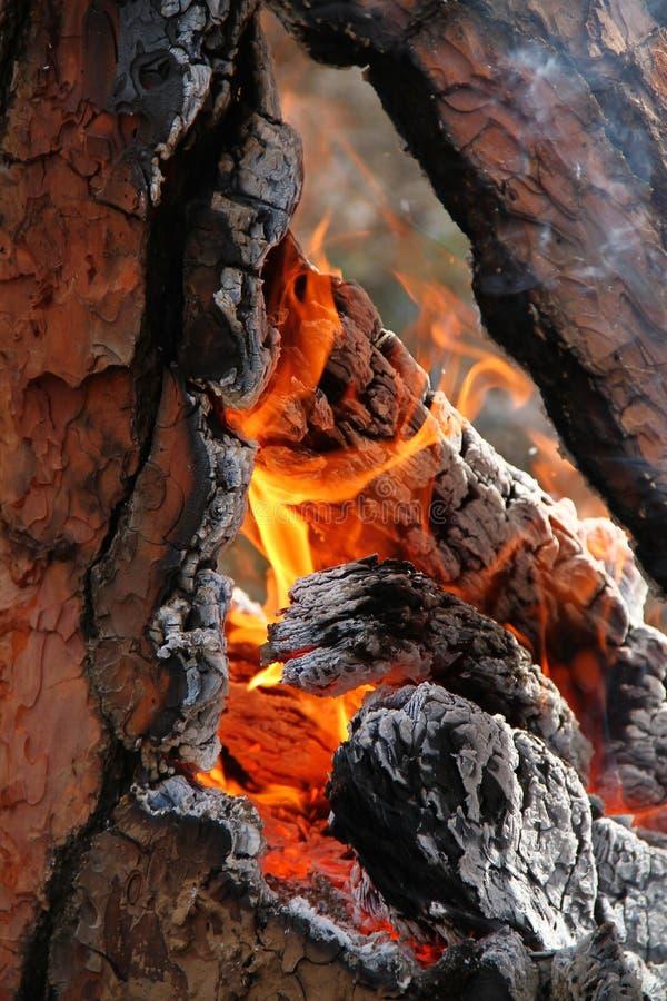 wildfire foto de stock royalty free