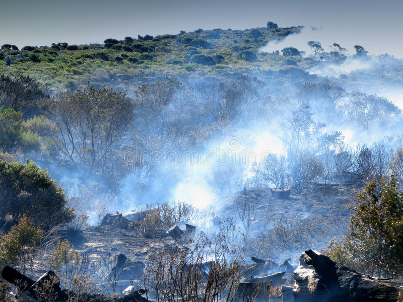 Download Wildfire stock image. Image of forest, areson, bush, flames - 4731865