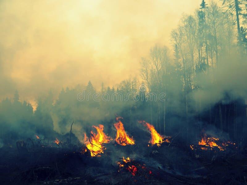 wildfire royalty-vrije stock afbeelding
