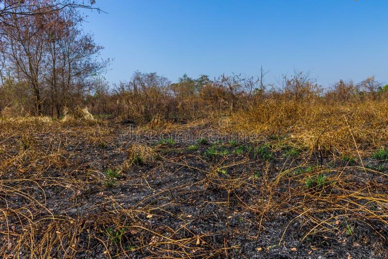 wildfire lizenzfreie stockfotos