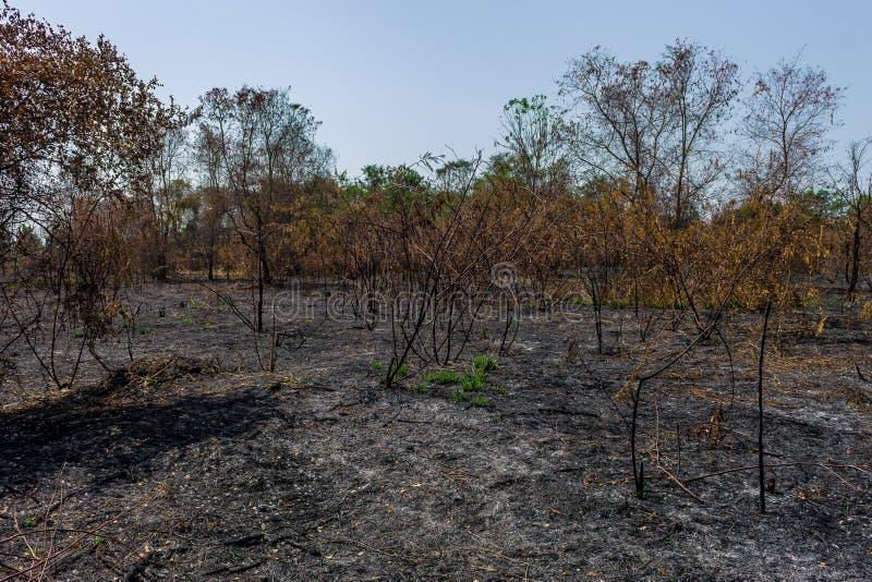 wildfire stockfotografie