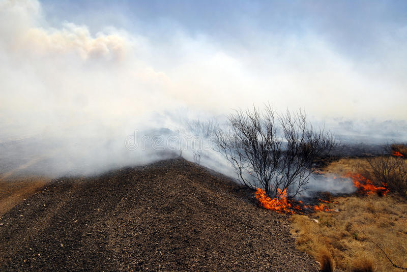 wildfire imagens de stock royalty free