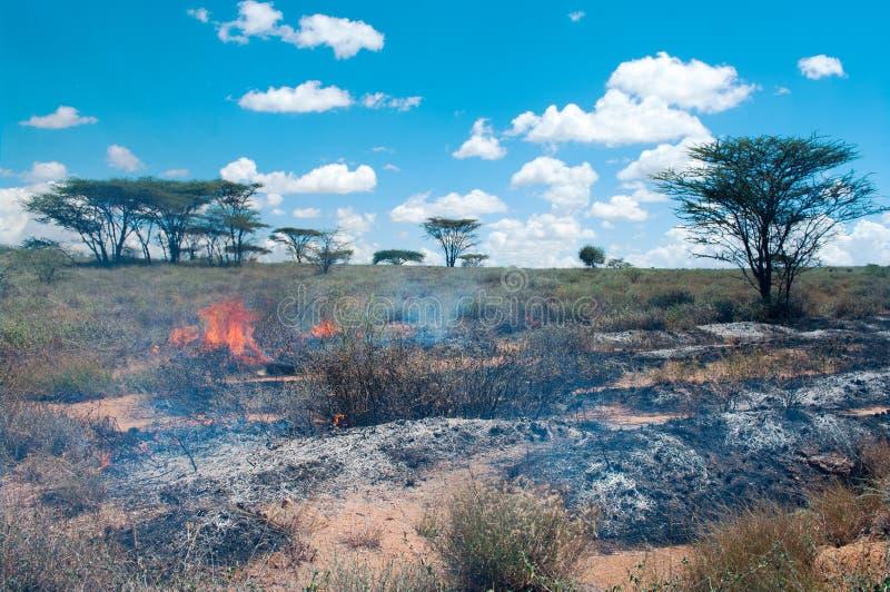 Wildfire In African Savanna Stock Photos
