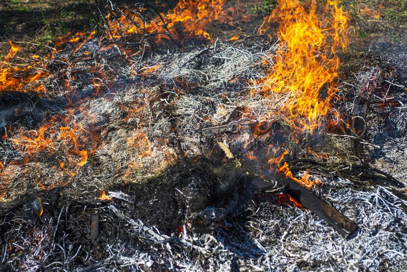 Wildfire. The disaster brings regular damage to nature. Dead forest after wildfire.  royalty free stock photo