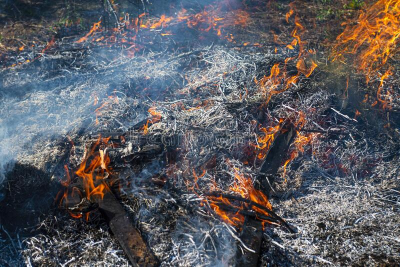 Wildfire. The disaster brings regular damage to nature. Dead forest after wildfire. Wildfire. The disaster brings regular damage to nature. Dead forest after stock photos