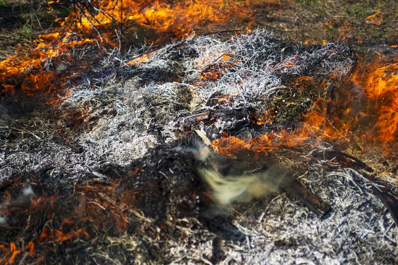 Wildfire. The disaster brings regular damage to nature. Dead forest after wildfire.  royalty free stock image