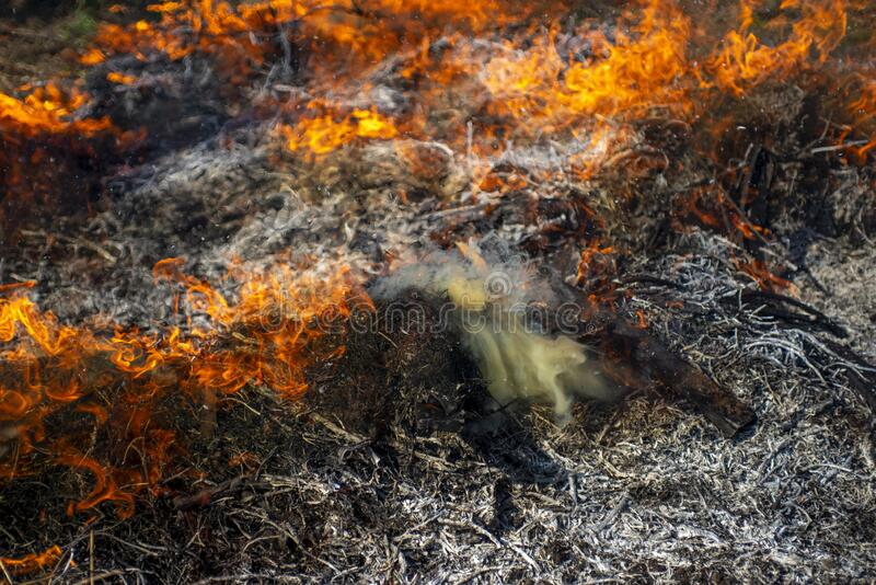 Wildfire. The disaster brings regular damage to nature. Dead forest after wildfire.  stock photo