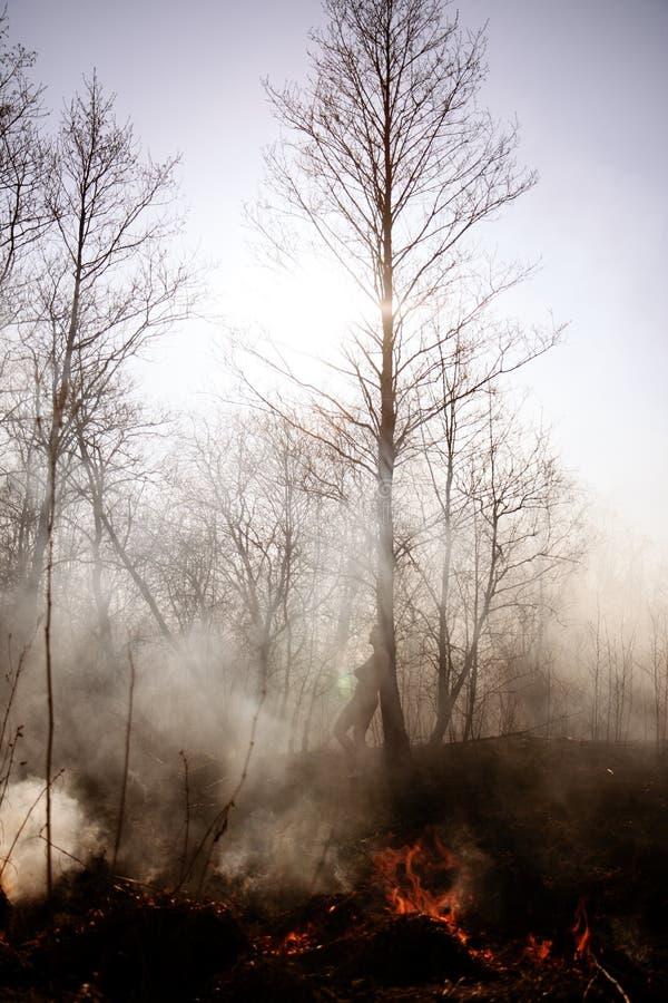 wildfire Feuer Globale Erwärmung, Klimakatastrophe Conce lizenzfreies stockfoto