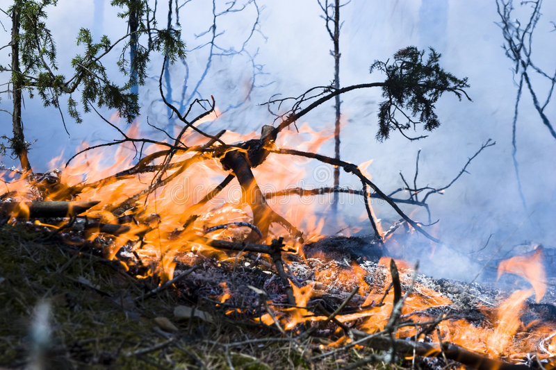 Wildfire in the forest royalty free stock photography