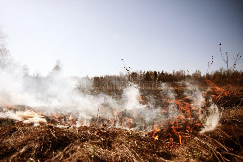 wildfire Fuego Calentamiento del planeta, catástrofe ambiental Conce imagenes de archivo