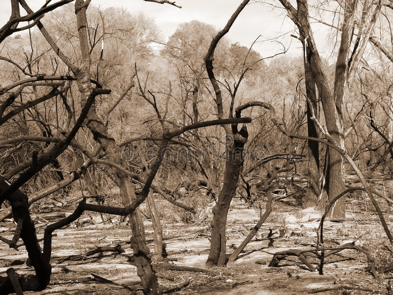 Wildfire results in sepia royalty free stock photos
