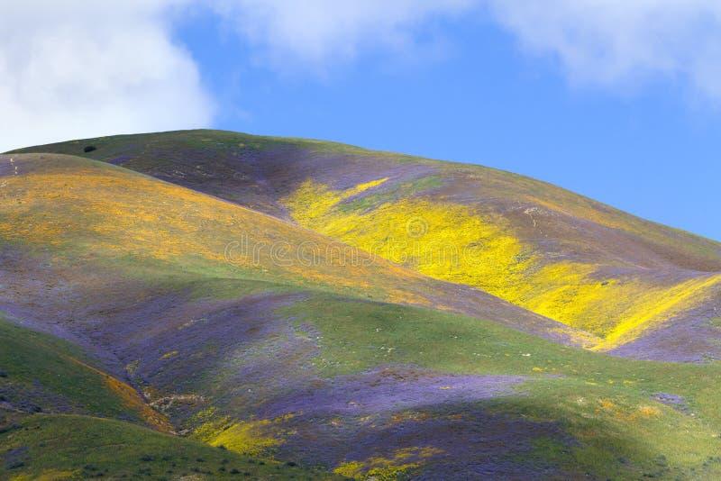 Wildflower ряда землетрясения стоковое фото rf