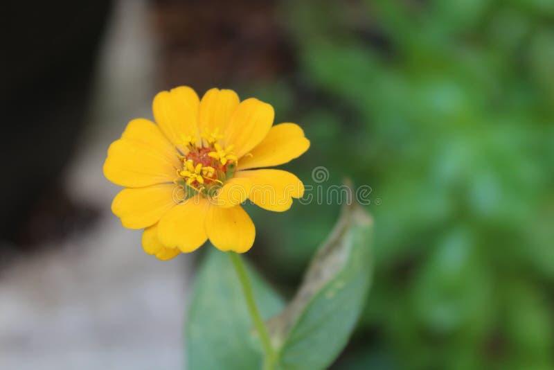 wildflower imagens de stock royalty free