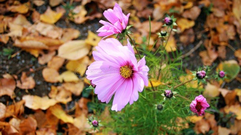 Цветок, флора, завод, Wildflower