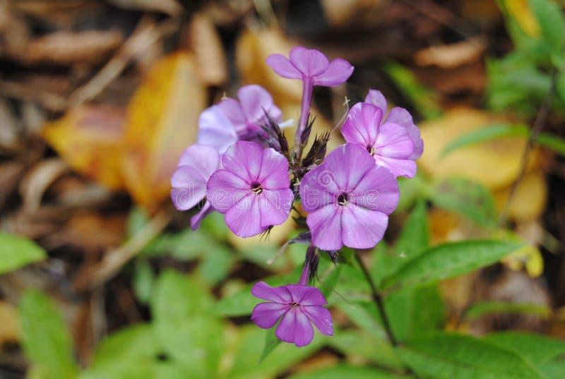 wildflower fotografia de stock royalty free