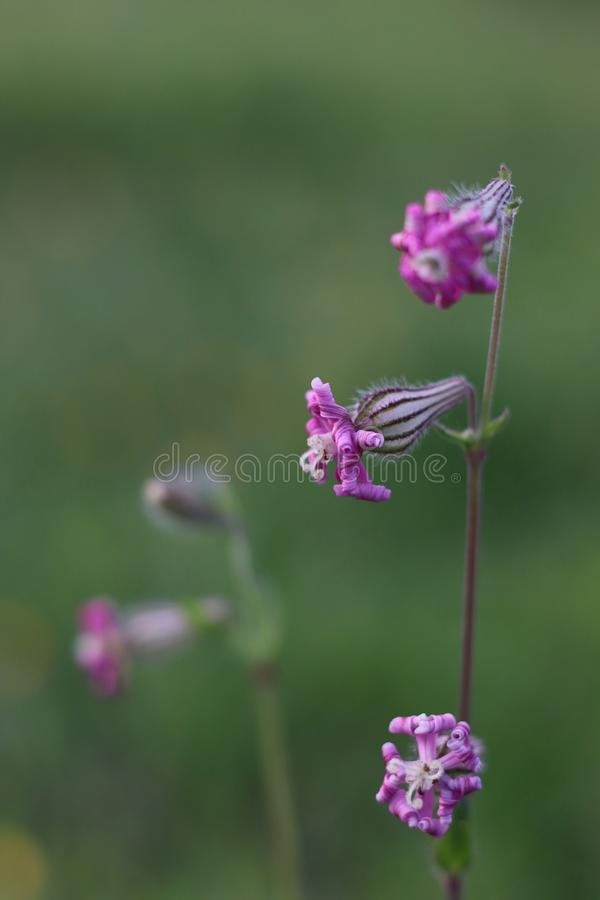 wildflower imagem de stock