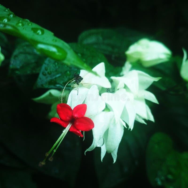 wildflower στοκ εικόνες