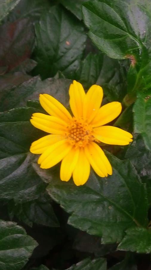 wildflower стоковые изображения rf