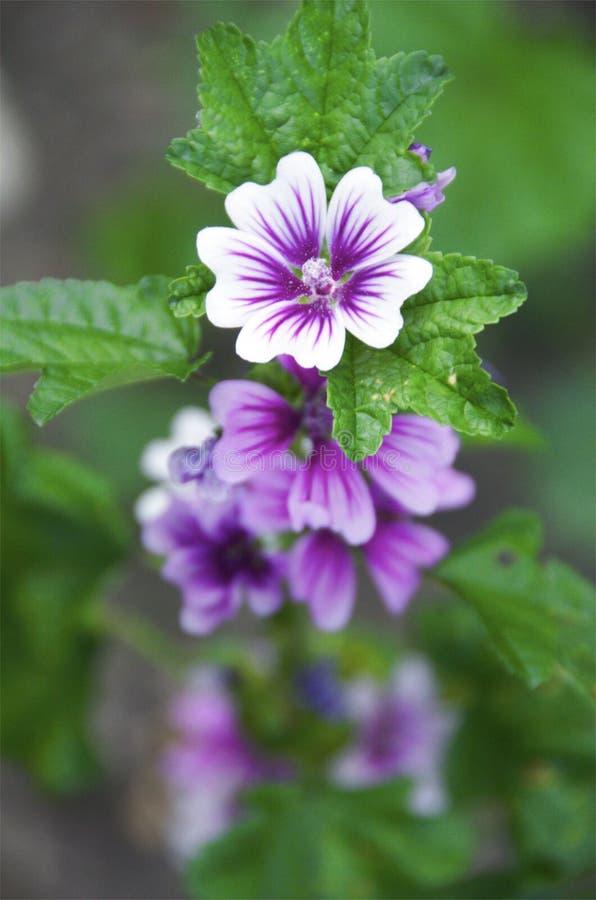 wildflower стоковое фото