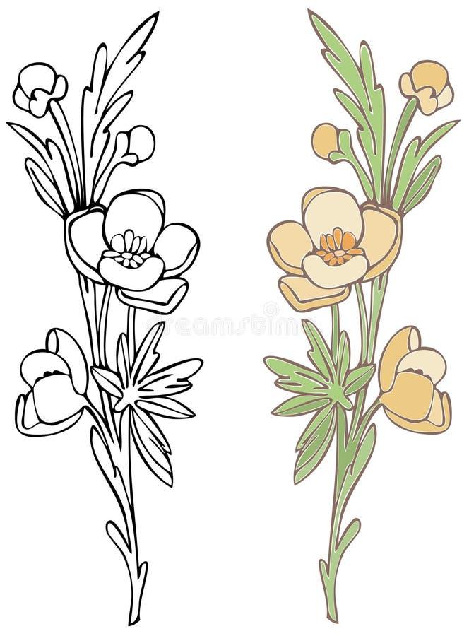 Wildflower ilustração do vetor