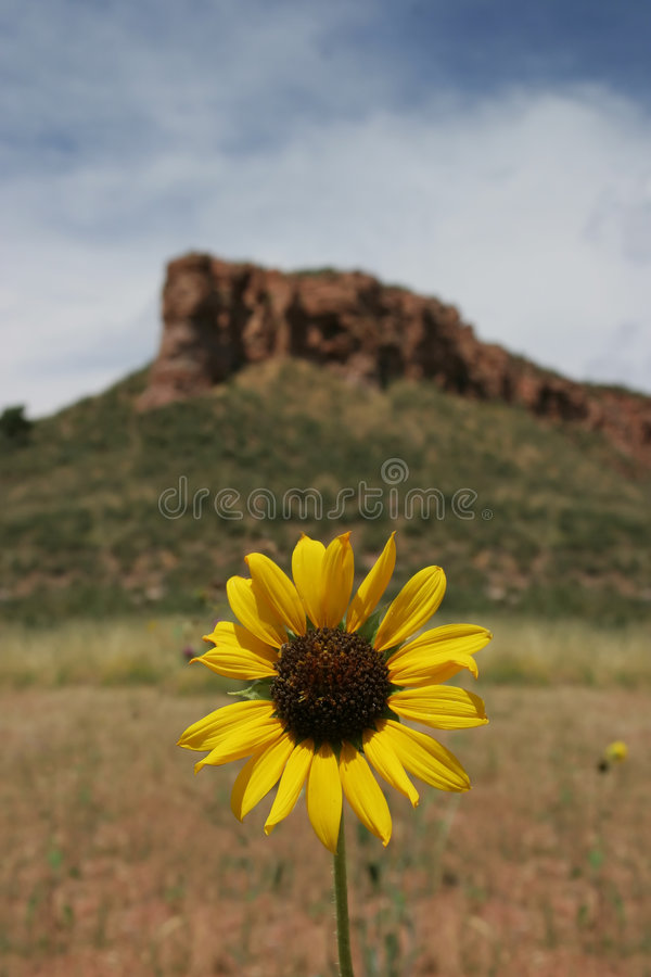 Download Wildflower stock image. Image of hill, wildflower, solitary - 167039