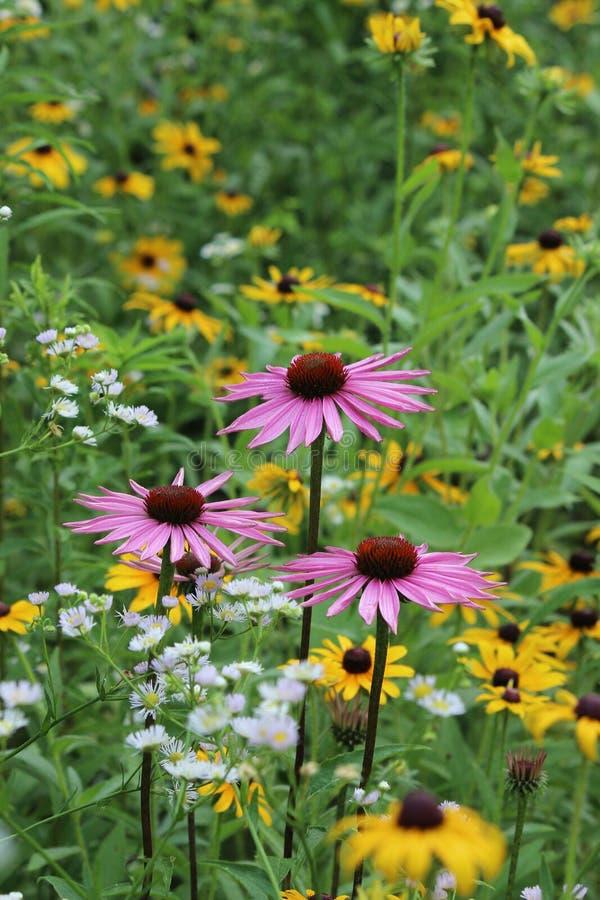 Wildflower foto de stock
