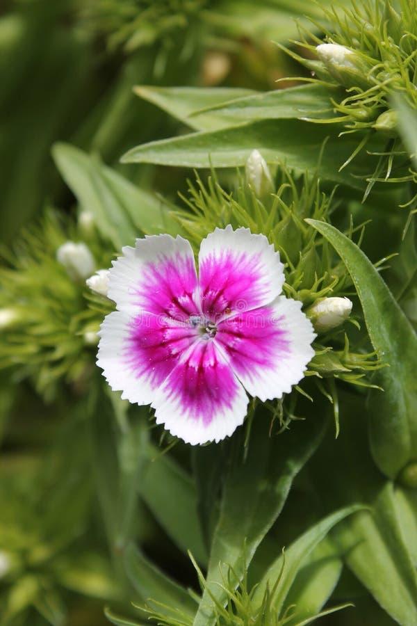 wildflower стоковое изображение rf