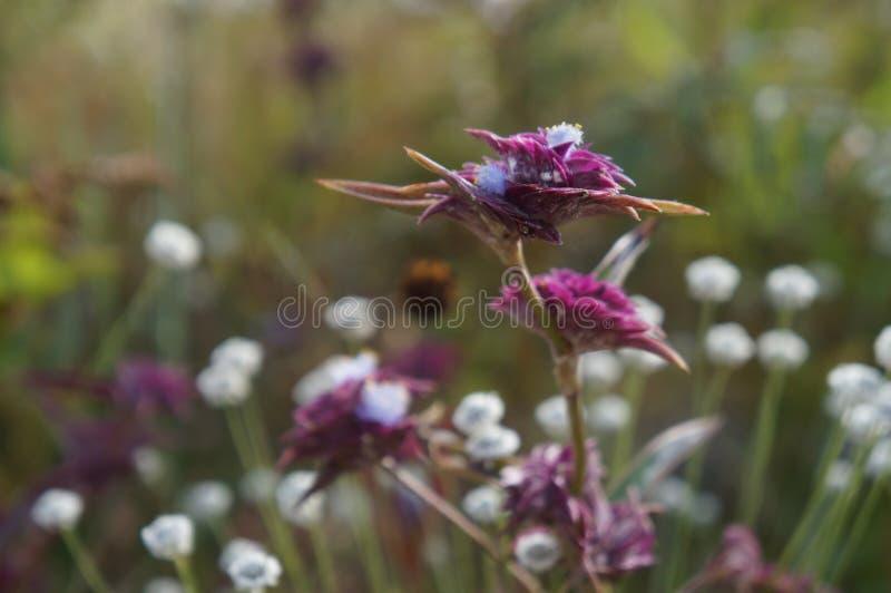 Wildflower - 3 стоковое изображение rf