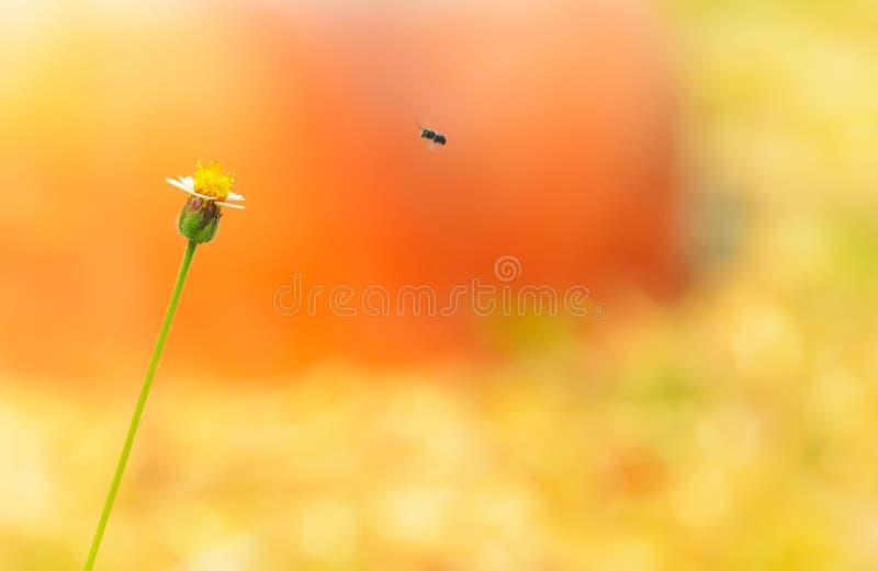 wildflower photos stock