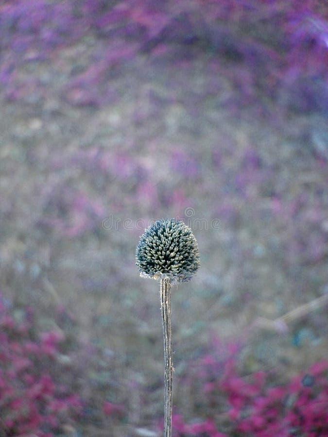 wildflower fotografia stock libera da diritti