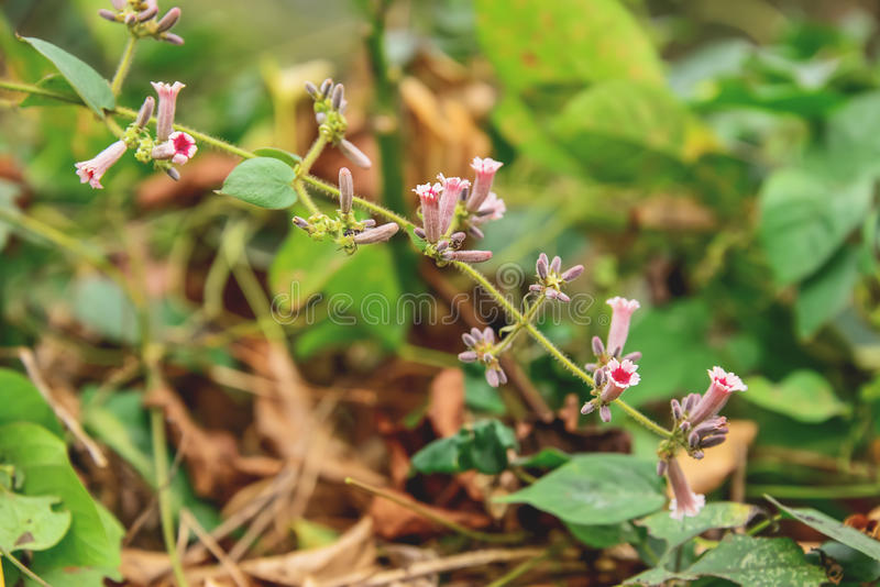 wildflower photographie stock