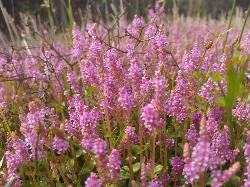 wildflower imagen de archivo