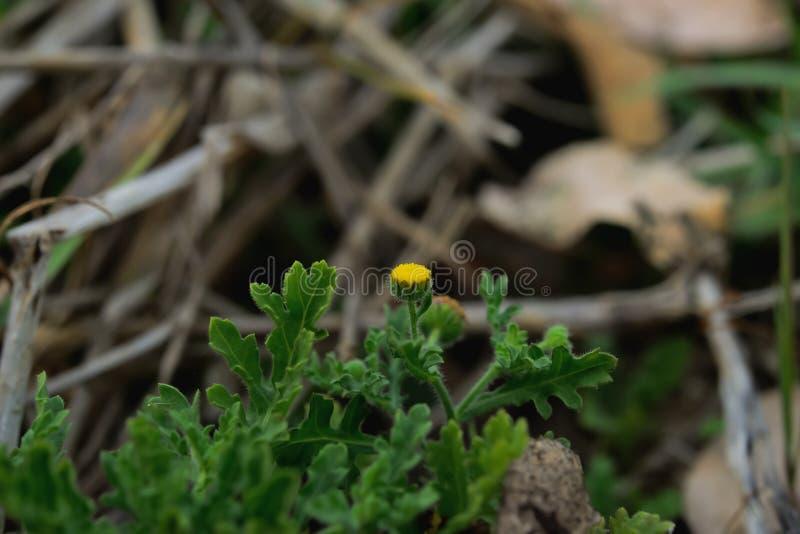 wildflower photographie stock libre de droits