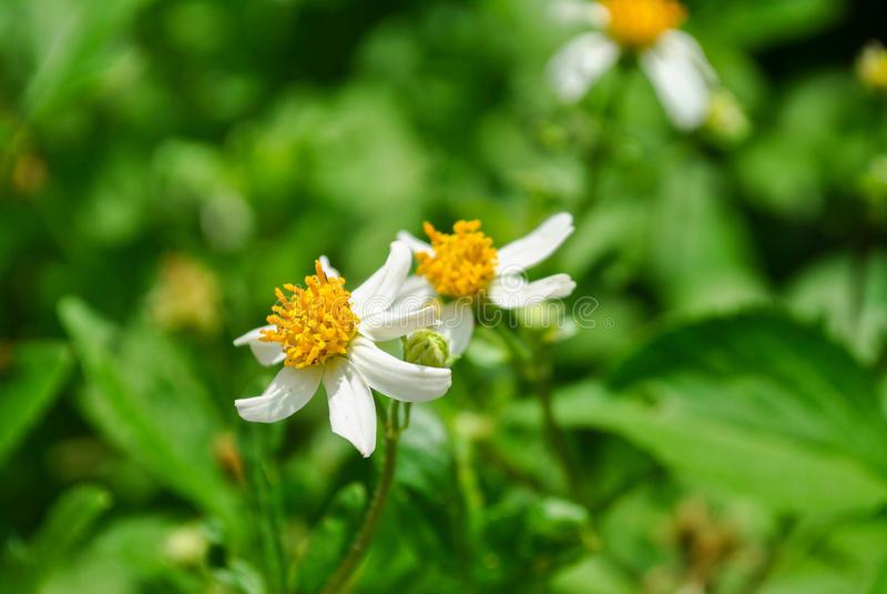 wildflower fotografía de archivo