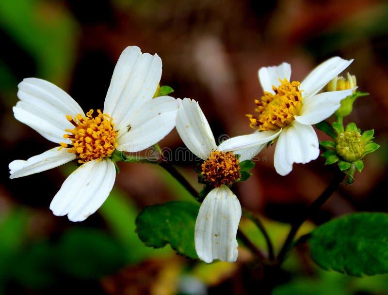wildflower imagenes de archivo