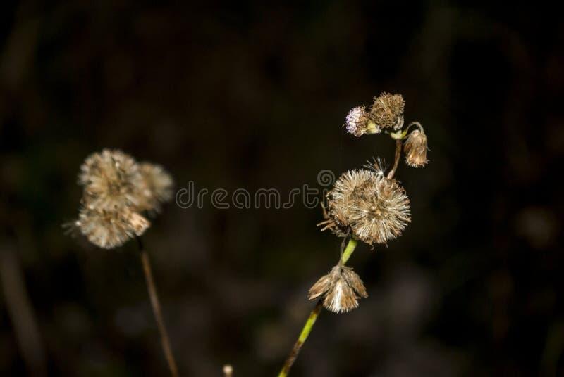 wildflower foto de archivo libre de regalías