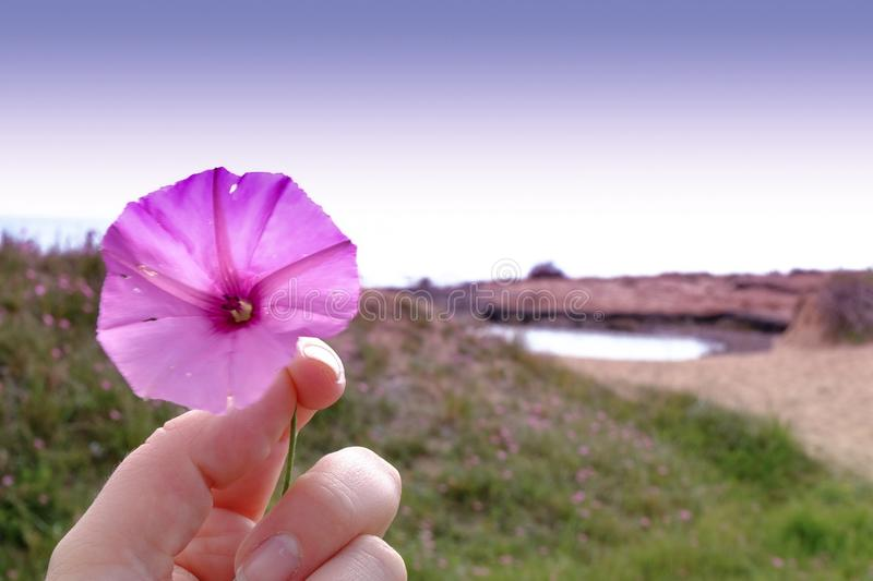 wildflower photo stock