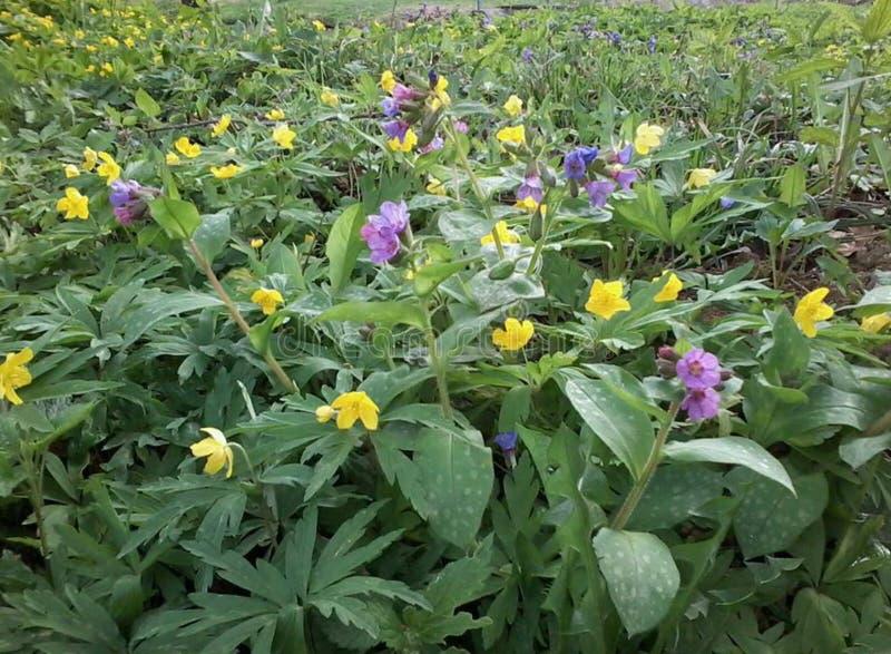 wildflower lizenzfreies stockfoto