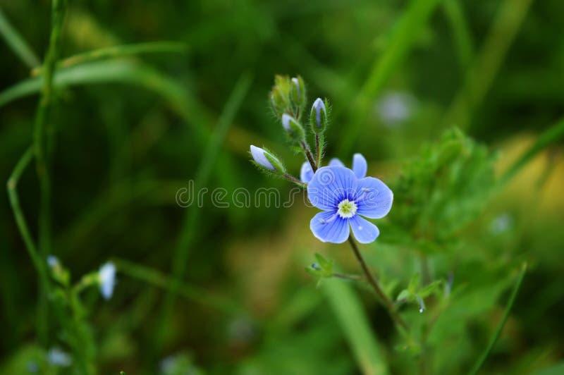 wildflower images libres de droits