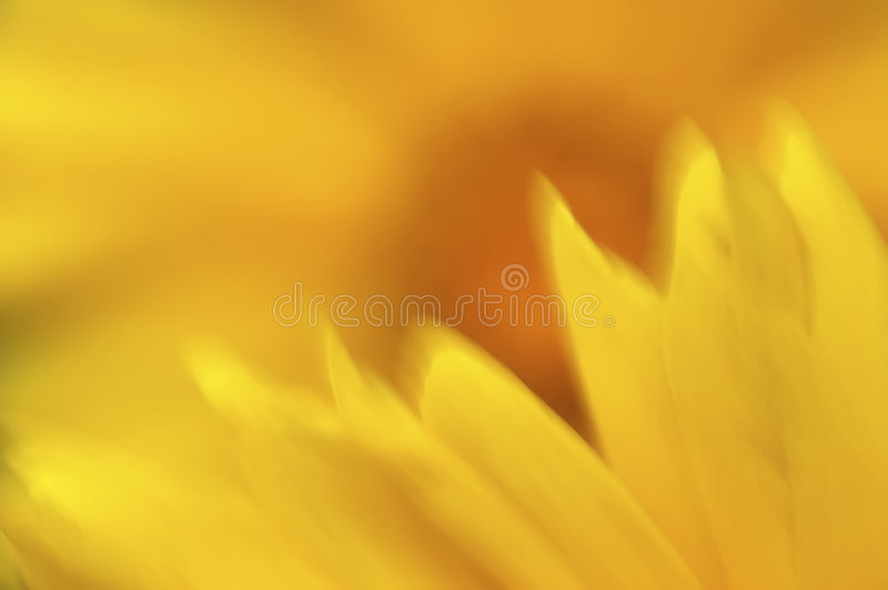 Download Wildflower Abstract stock image. Image of colors, colorful - 1890573