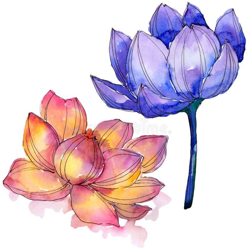 Wildflower akwareli kolorowy lotosowy kwiat Kwiecisty botaniczny kwiat Odosobniony ilustracyjny element ilustracja wektor
