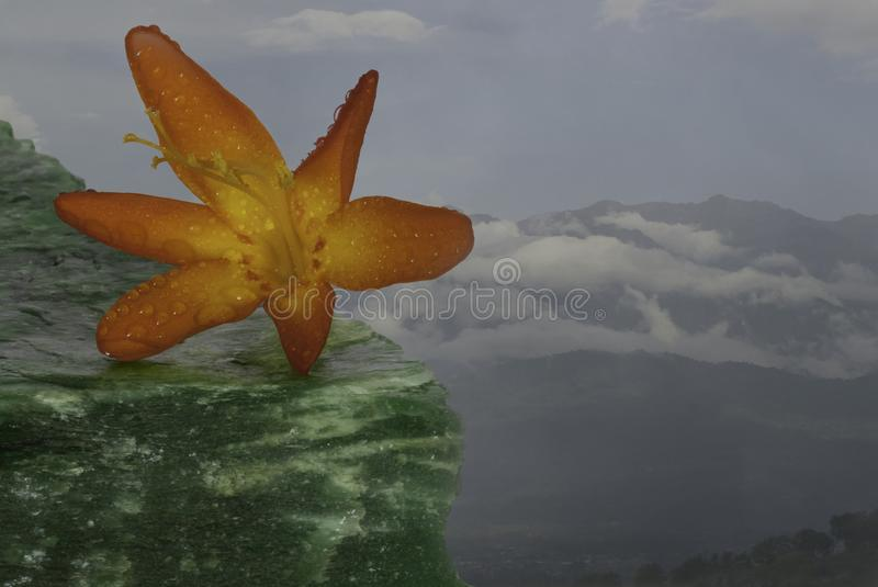 Wildflower next to an abyss. Wildflower appearing to be next to an abyss, with the Chirripo Mountain in the background. It gives the idea of being a risk-taker royalty free stock image
