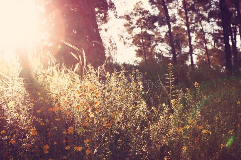 Wildflower background. Instagram effect photo.  royalty free stock image