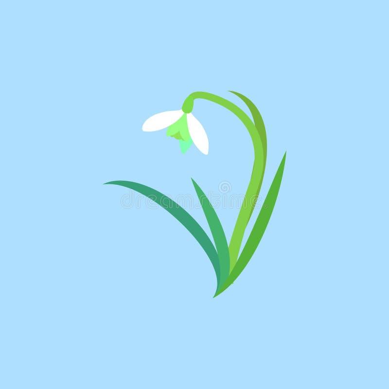 Wildflower blanc sensible de tige et de feuilles Perce-neige ou fleurs communes de nivalis de Galanthus de perce-neige illustration de vecteur
