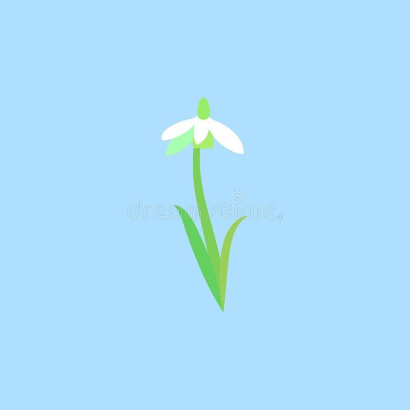 Wildflower blanc sensible de tige et de feuilles Perce-neige ou fleurs communes de nivalis de Galanthus de perce-neige illustration libre de droits
