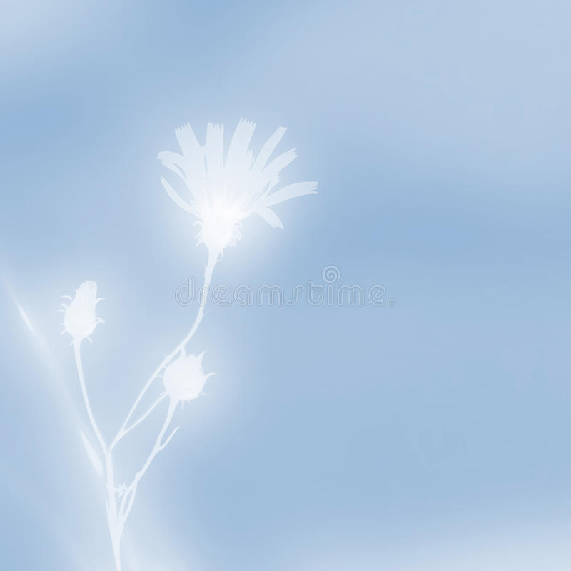 Wildflower on a blue vector illustration