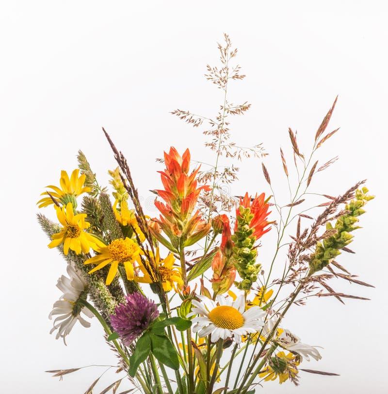 Wildflower-Blumenstrauß lokalisiert auf Weiß stockbild