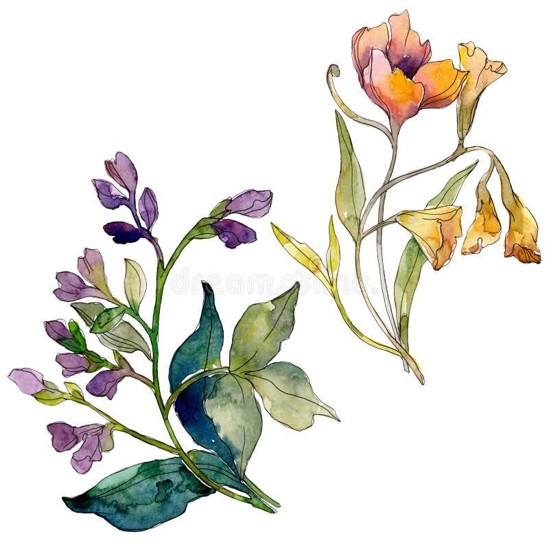 Wildflower bukieta kwieciści botaniczni kwiaty tła bazy projekta ustalona akwarela Odosobniony wildflowers ilustracji element royalty ilustracja